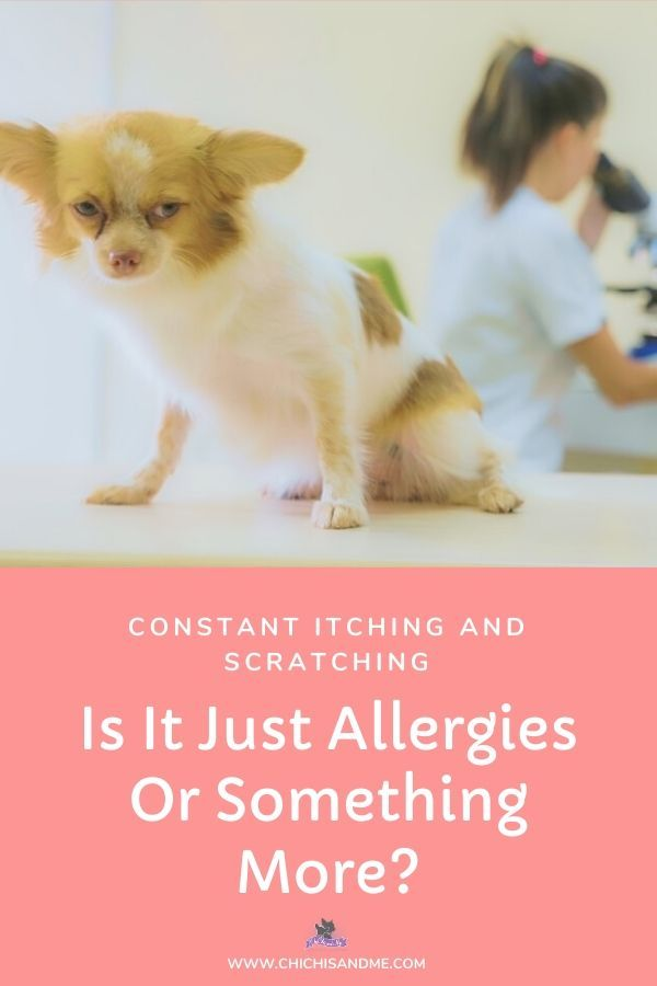 Constant Itching Is It Allergies Or Something More Allergic
