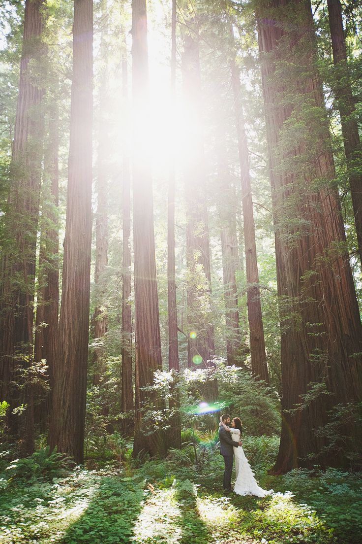My dream wedding destination.. Redwood forest | Wedding ...