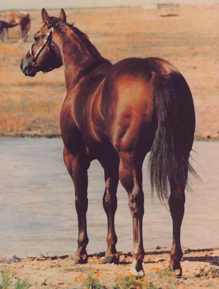 Zan Parr Bar, chestnut, 1974, by Par Three (by Three Bars TB), out of Terry's Pal, by Poco Astro. 2nd dam, Gold Raider, by Semotan's Streak. 3rd dam, Dusty Dun, by Chief (by Saladin). AQHA Champion, World Ch Halter Stallion 3 times; High Point AQHA Halter Stallion, 1977; 1979 AQHA High Point Steer Roping Horse. 600 AQHA points (245 halter, 355 performance).    Sire of 653 AQHA foals, 1977-1988.