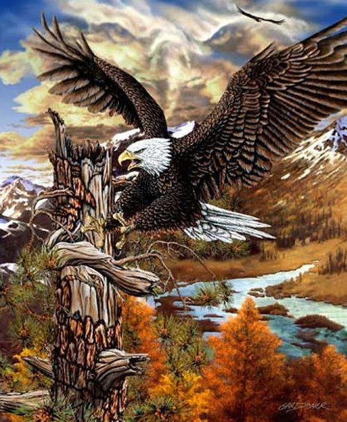 Symboliek van de adelaar als totemdier: autoriteit, kracht, macht, onafhankelijkheid, scherpe blik, snelheid, vernieuwing, visie en vrijheid...