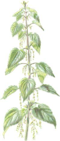 """Discovery Health """"Herbal Remedies for Allergies"""" (with the science behind it)"""