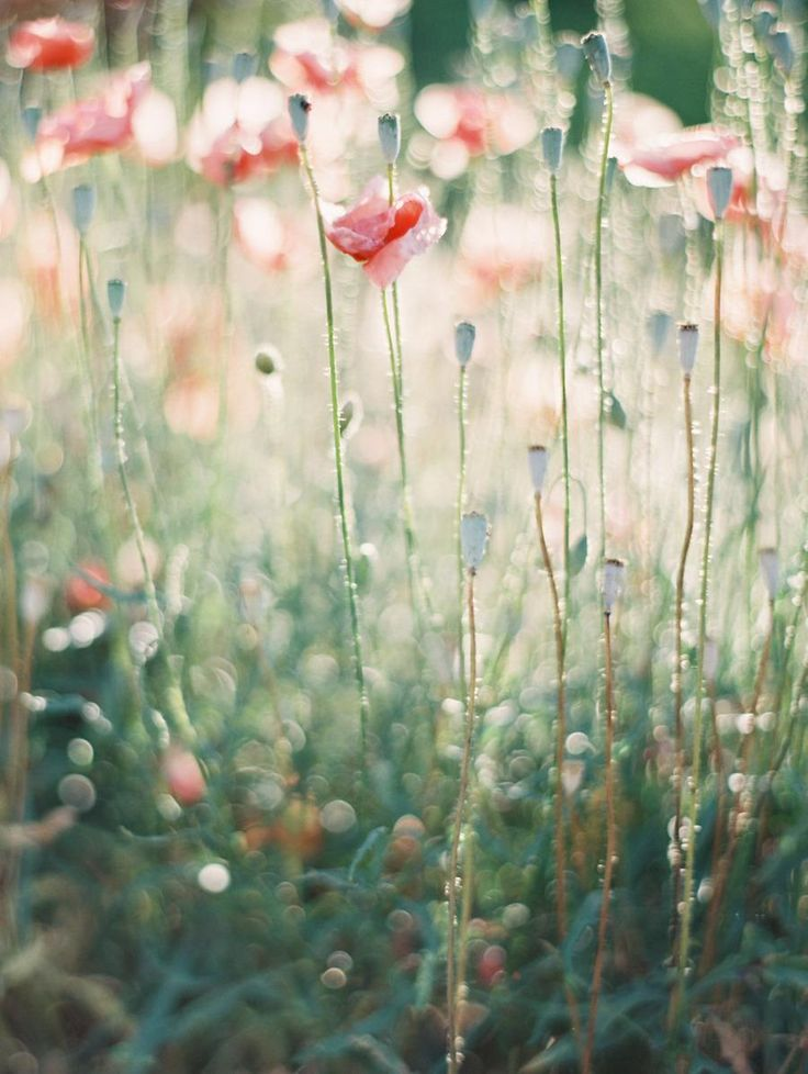 inspiration spring blooms erich mcvey photography via: style me pretty