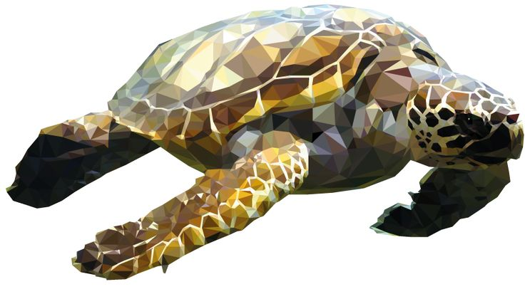 turtle - Low-Poly illustration Research by Mordi Levi