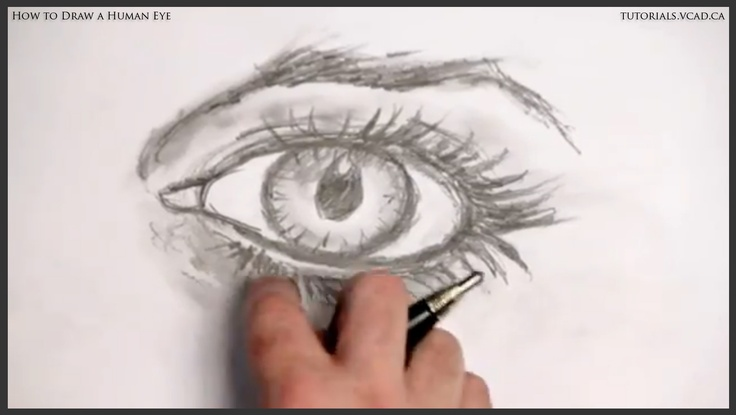 Character Design Vancouver : Best how to draw the human eye images on pinterest
