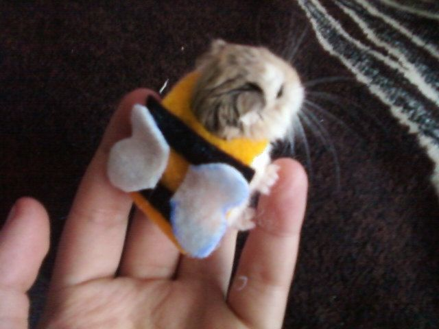 Dwarf Hamster, Syrian, or Mouse Bumble Bee Costume