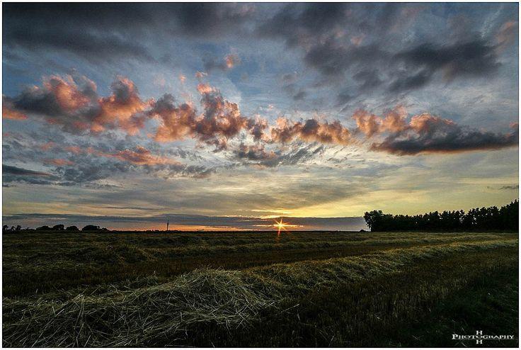 """""""Evening Glow"""" ... Mal eben spontan hoch zum Feld um den Sonnenuntergang zu knipsen"""