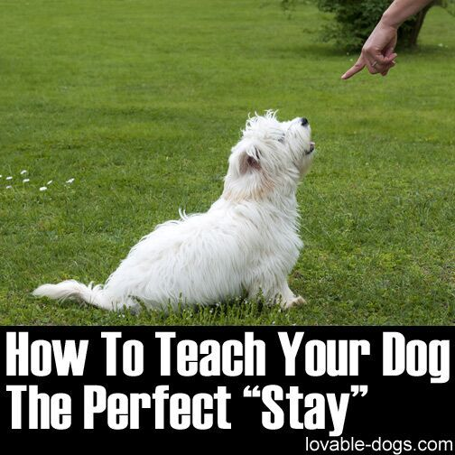 How To Teach Your Dog The Perfect Stay   ►►http://lovable-dogs.com/how-to-teach-your-dog-the-perfect-stay/?i=p