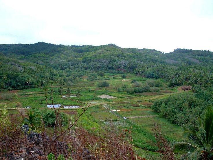 Ivirua, Inland overview.  Best for growing swamp taro.