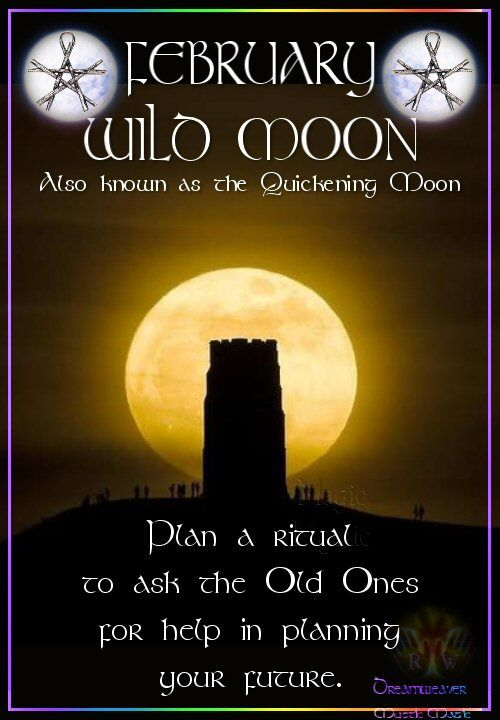 Moon:  FEBRUARY ~ WILD #MOON: Also known as the Quickening Moon. Plan a ritual to ask the Old Ones for help in planning your future.