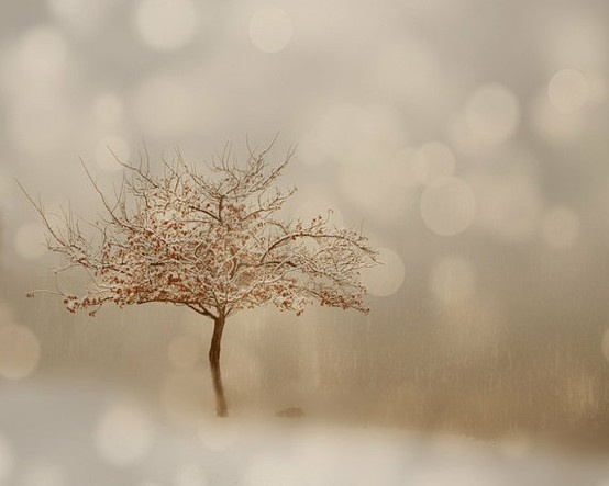 Gorgeous photo of tree.: Snow Photography, Serenity White, Winter Trees, Inspiration Photography, Winter Wonderland, Fine Art Photography, Sparkly Winter, Lucy Snow, Photography Ideas