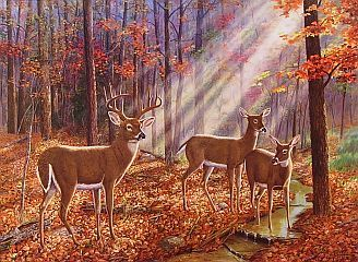 art of randy mcgovern   Randy McGovern-Saved By A Twig - Whitetail Deer. Limited Edition Print ...