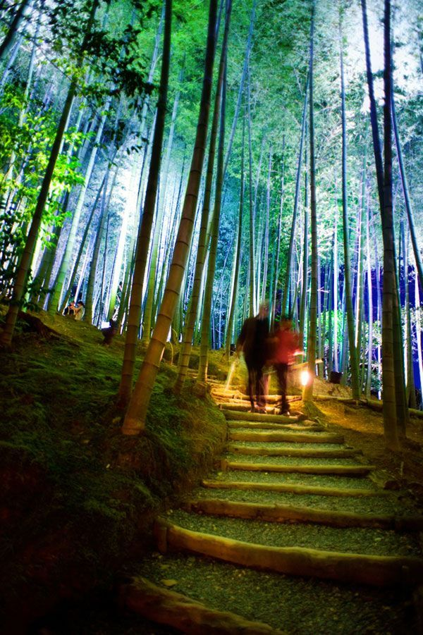 The Enchanted Forest Lighting Event at Faskally Wood Pitlochry (Scotland) by Flux | Designing with Light and Shadow | Pinterest | Landscape architecture ... & The Enchanted Forest Lighting Event at Faskally Wood Pitlochry ... azcodes.com