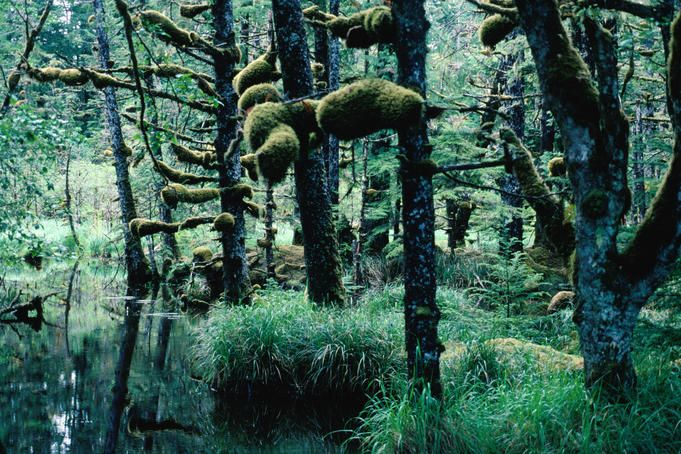 Naikoon Rainforest, Queen Charlotte Islands (Haida Gwaii), British Columbia, Canada