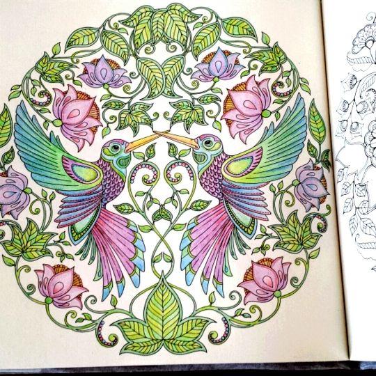 De 66 Basta Coloring Pages Johanna Basford Bilderna Pa