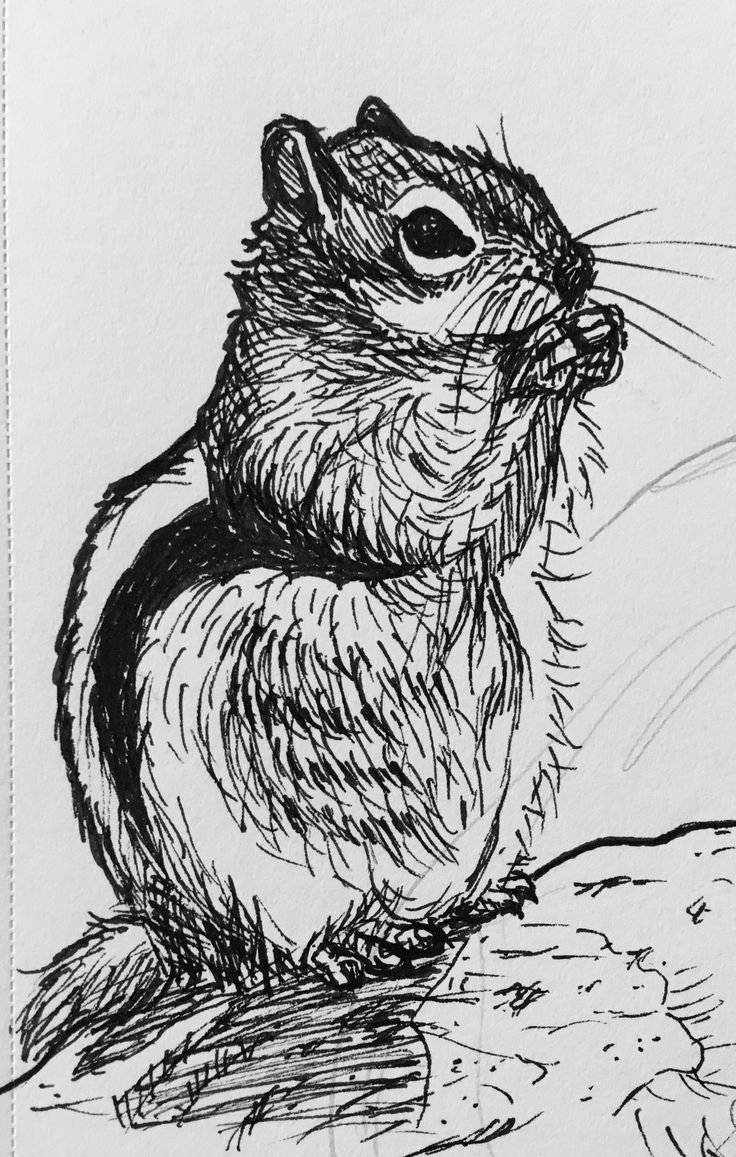 A squirrel from photo reference. That crosshatching on the head is horrible, I know. Anni Vilna