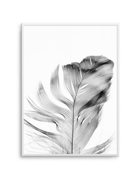 Feather | Grey