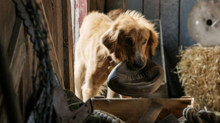 """A Dog's Purpose tell story about """"A dog goes on quest to discover his purpose in life over the course of several lifetimes with multiple owners..""""."""