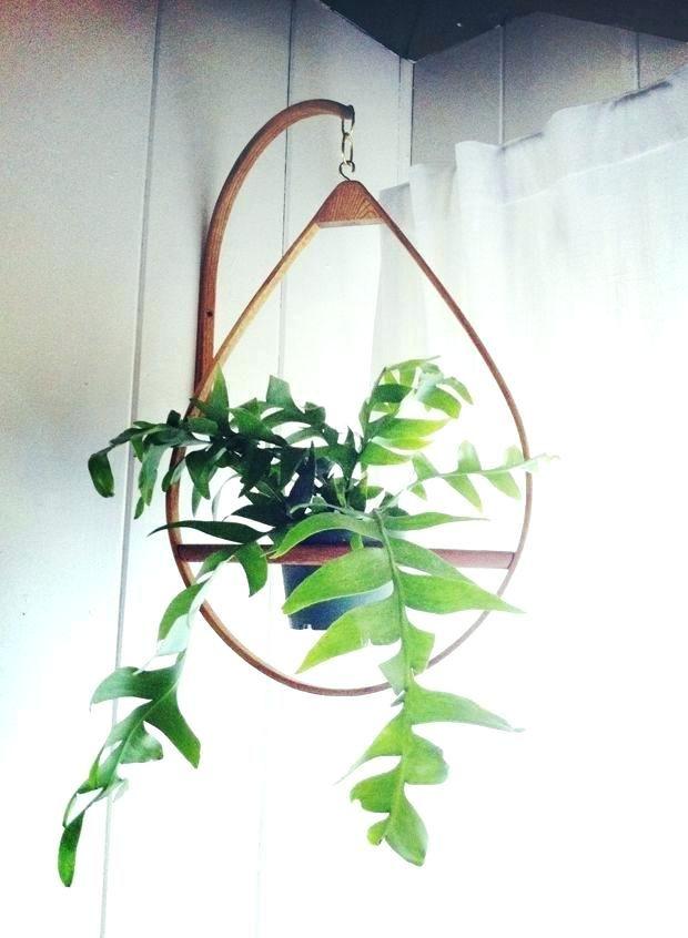 Wall Plant Hooks Plant Hanger Hooks Clothing Hooks Plant Hanging