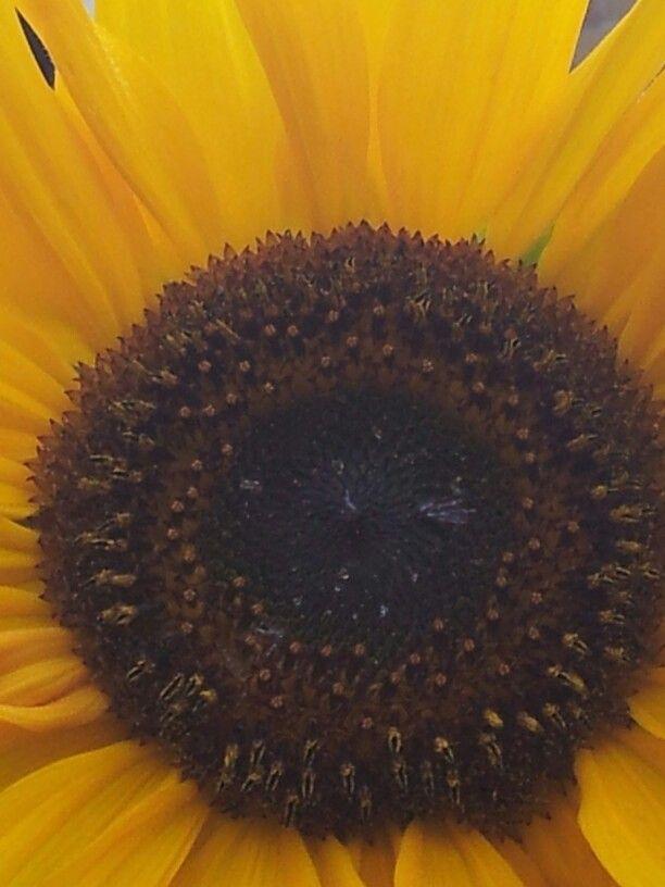 Bloemen afsnijding
