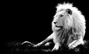 ASTROLOGY: Leo, Lead From The Heart