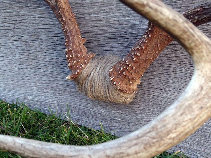 Twine Detail on buck mount