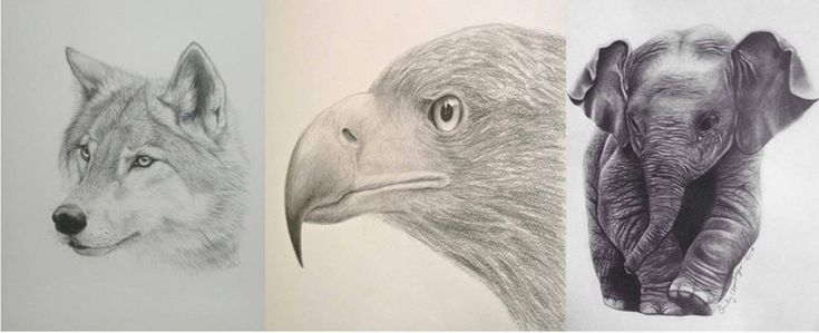 como dibujar narices de animales
