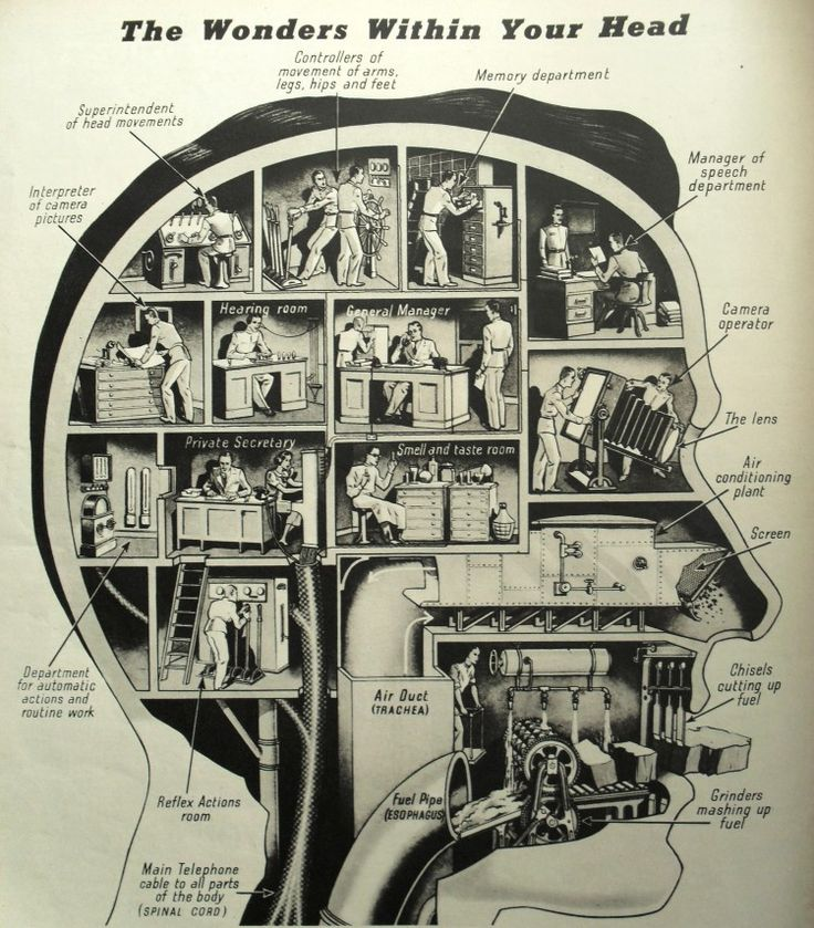 Vintage infographic  The wonders within your head 1938 Graphic, Look Magazine