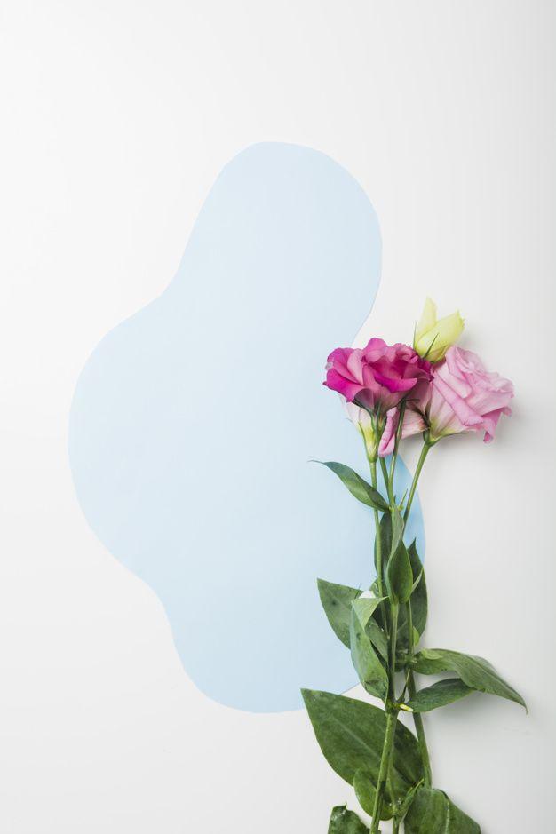 Hermosas Flores Sobre Fondo Azul Y Blanco Fondos Azules Azul Y Blanco Flores Fondo Blanco