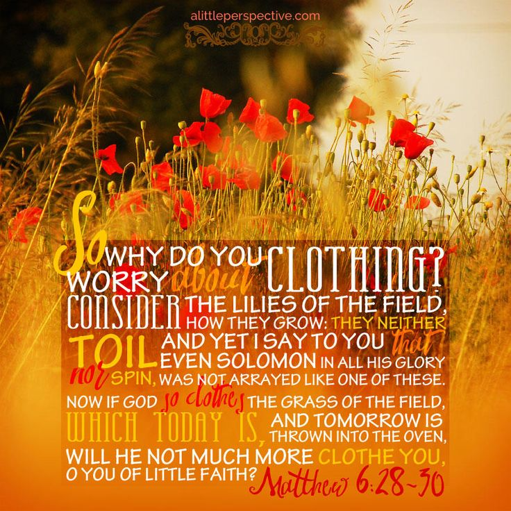 """""""So why do you worry about clothing? Consider the lilies of the field, how they grow: they neither toil nor spin, and yet I say to you that even Solomon in all his glory was not arrayed like one of these. Now if God so clothes the grass of the field, which today is, and tomorrow is thrown into the oven, will He not much more clothe you, O you of little faith?"""" Matthew 6:28-30   scripture pictures at alittleperspective.com"""
