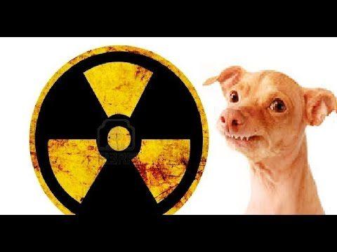 Nukleární fofola