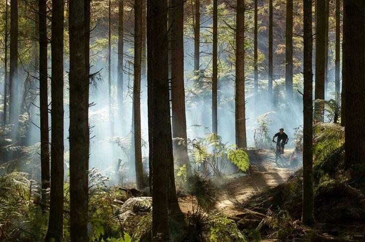 MTB Rotorua, New Zealand. Best half-day experience you'll ever have. Mountain biking NZ !! MM. https://www.pinterest.com/wocycling/