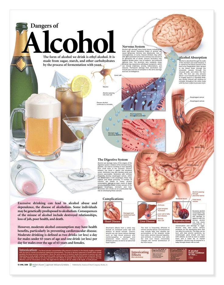 Dangers of Alcohol Chart - Alcholol Education Poster - AnatomyStuff