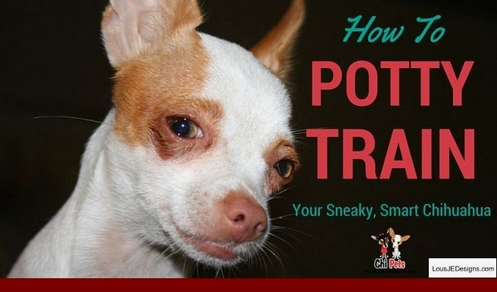 Crate Training Tips For A Puppy And Pics Of How To Get A Puppy To