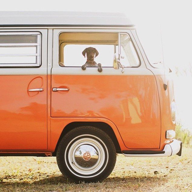 vw camper van T2 complete with dog! Partner in crime. Photo by @rodtrvn