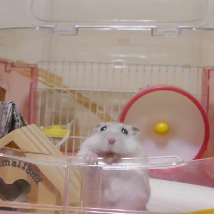 Cute lil hamster!