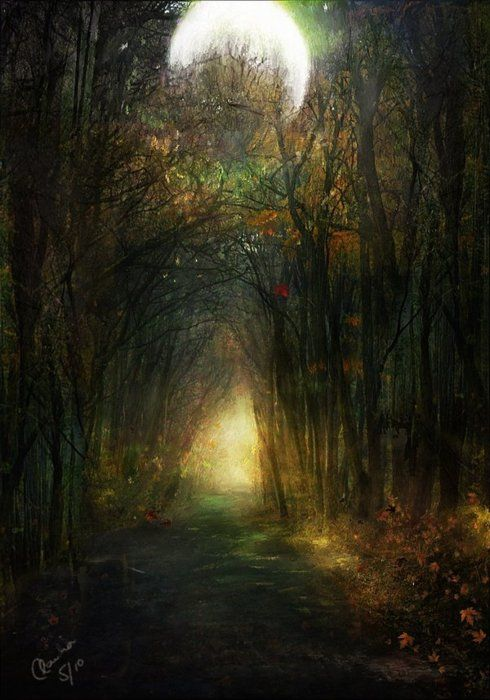 the forest where you get lost and come out in a fairy tale land