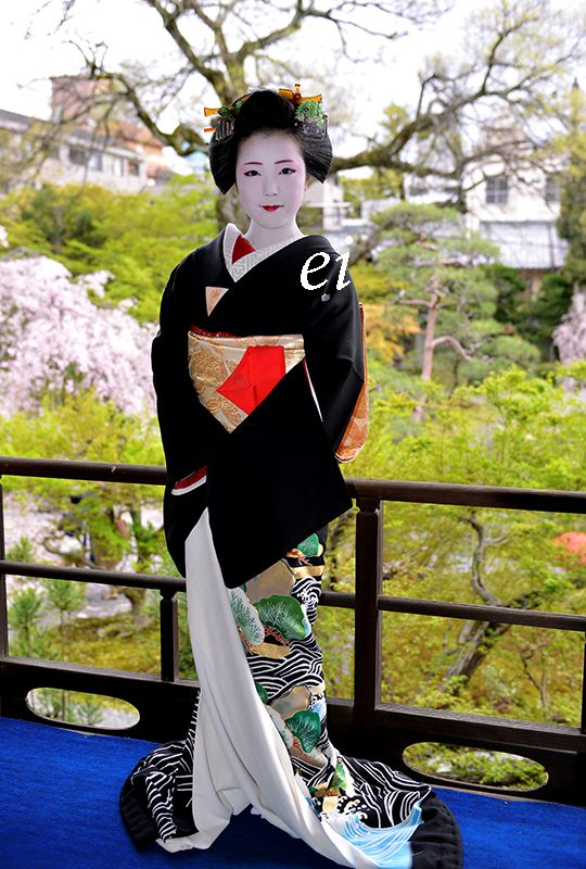 The retired geiko Ayano dressed for the tea ceremony of Miyako Odori. With the view on the cherry blossoms and the great sophistication of Ayano, this photo is wonderful! (Source)