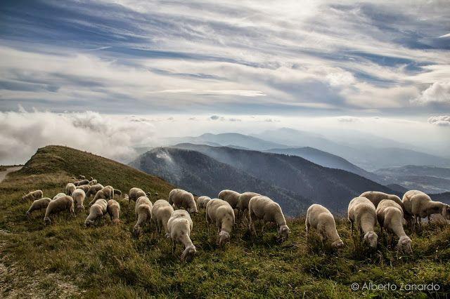 Oh sheep!! An excursion in Col Visentin (Vittorio Veneto)