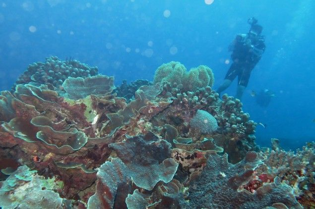 Riyanni Djangkaru Pun Endorser Dive Site Indonesia di Dive Magazine - Metro TV News
