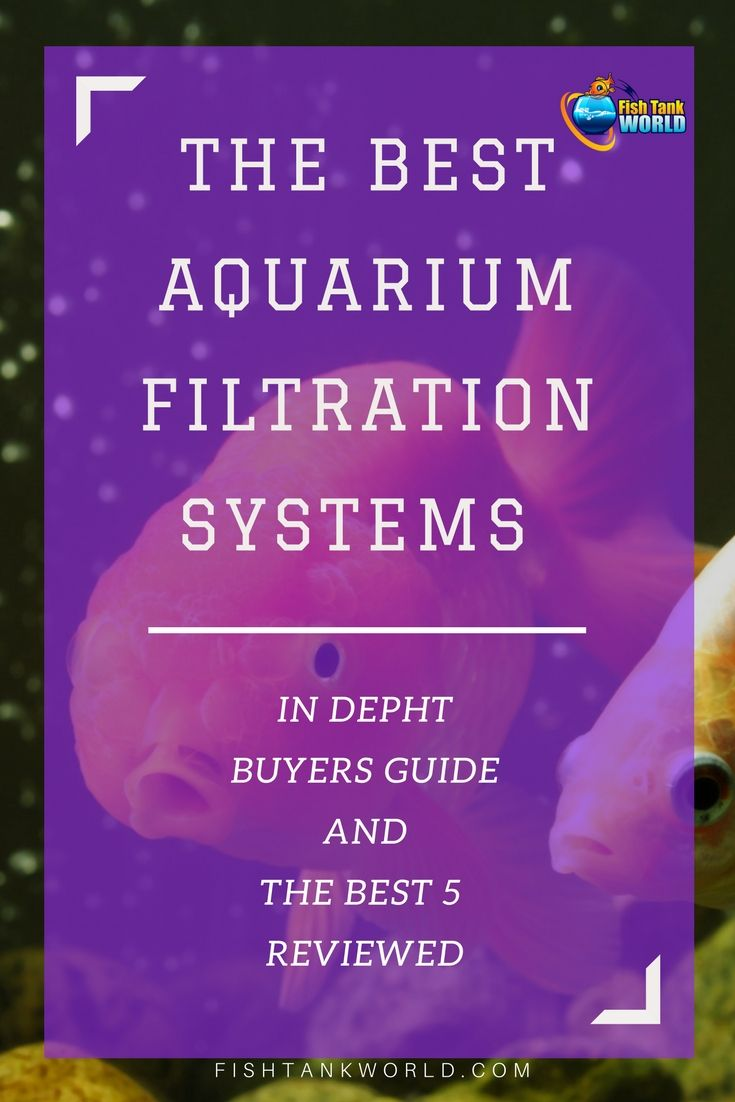 If you are looking for the best aquarium filter for your tank, this guide is for you. All the most common types of aquarium filters explained: canister filters, undergravel filters, power filters, wet / dry filters and filters for high capacity operations. via @fishtankworld0195