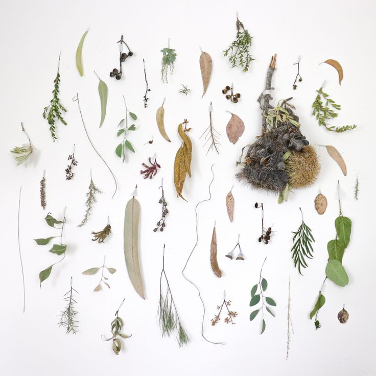 Making time for beauty: foraged Australian native flora wall by Belinda Evans