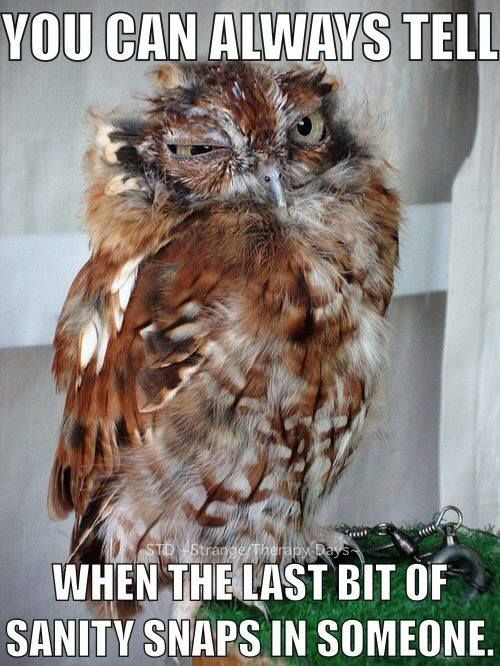 You Can Always Tell When The Last Bit Of Sanity Snaps In Someone Owl Owl Birds Funny Owls
