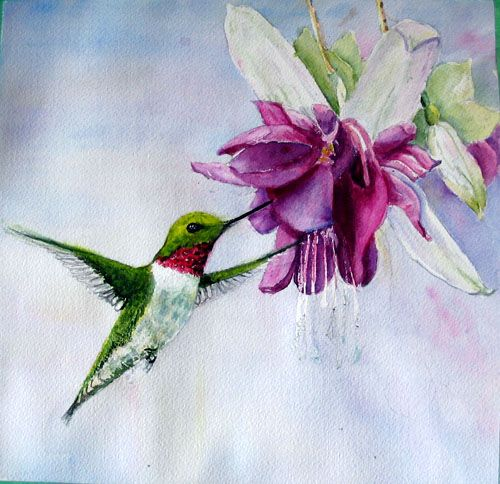 79 best images about watercolor birds & flowers to paint ...