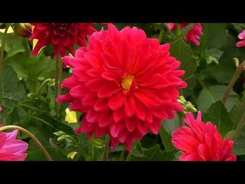 ERNESTO CORTAZAR - RHAPSODY ON A THEME OF PAGANINI - BIRTHDAY MEMORIES F...