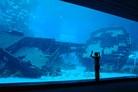 Shipwreck tank, biggest fish tank in the world @marine life park Singapore