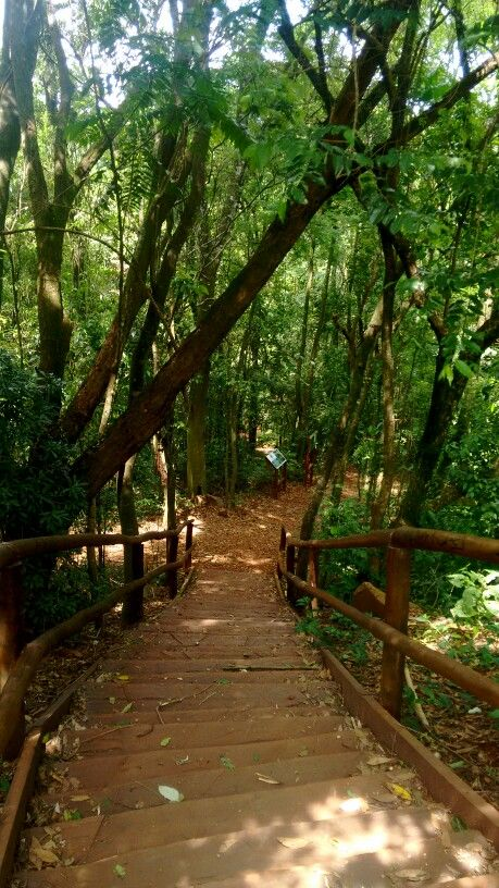 Trilha. Jardim Botânico - Londrina, PR.