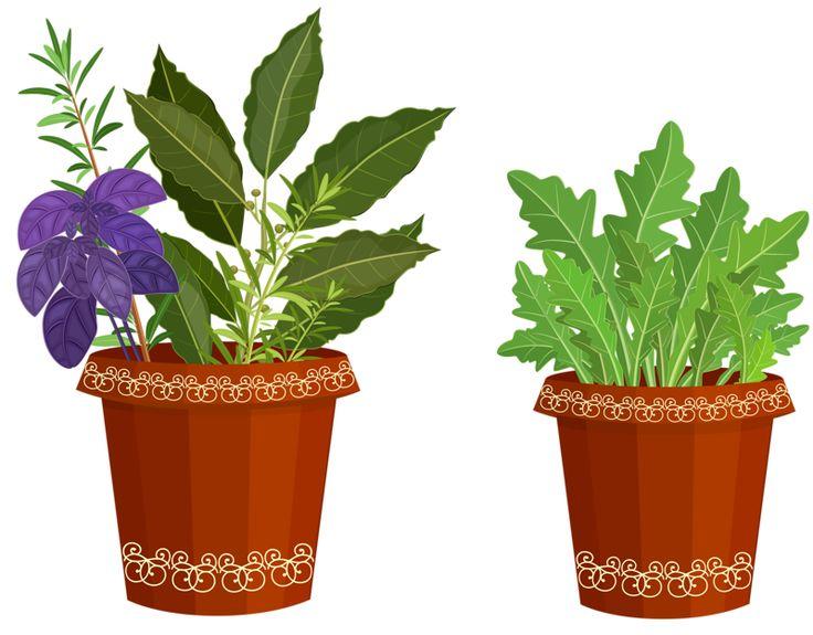 clipart garden plants - photo #38