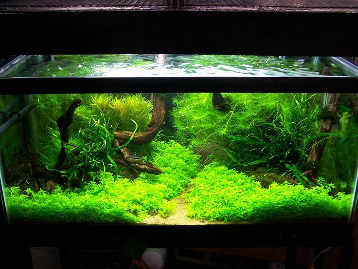 120 best Aquarium images on Pinterest Aquascaping Aquarium