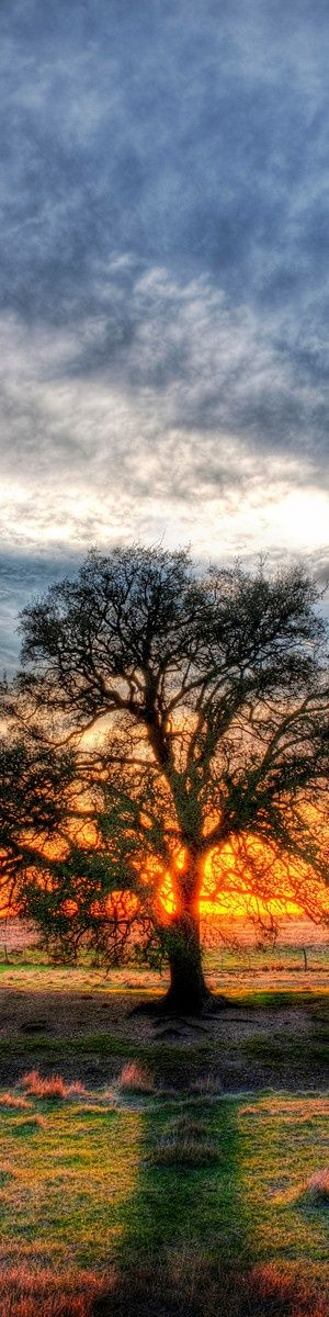 ♡ beautiful tree silhouetted in sunset. Great perspective.