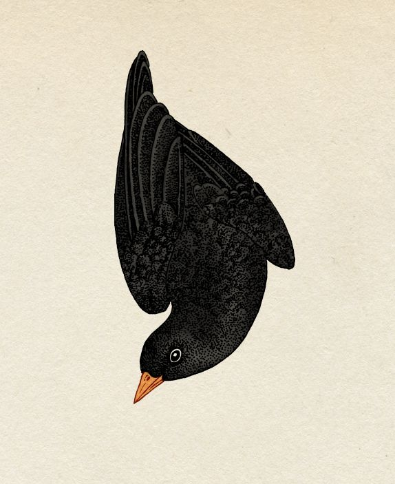 Blackbird detail. Katie Scott